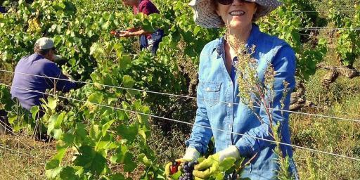 Barefoot Blogger Wine Harvest #Wine #Provence #France