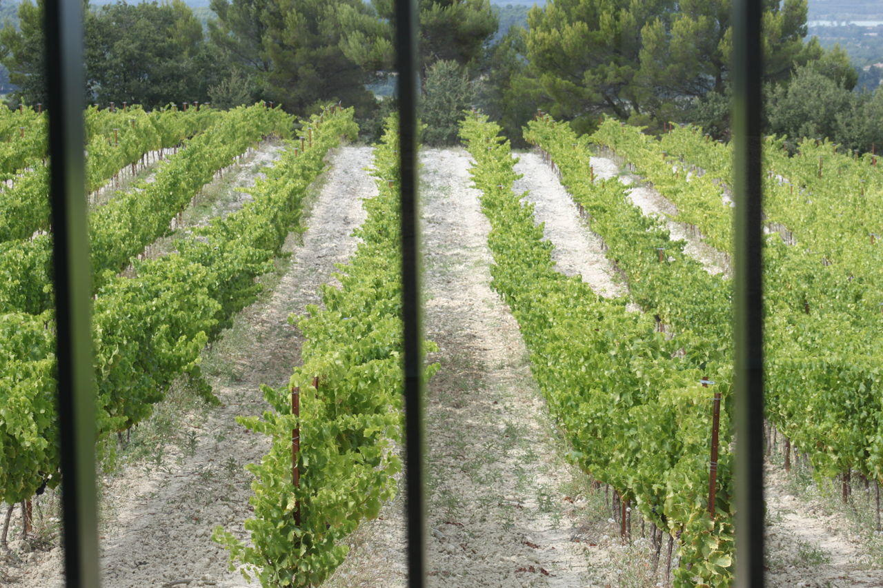Chateau la Coste #ProvenceWines #ChateaulaCoste @PerfectlyProvence