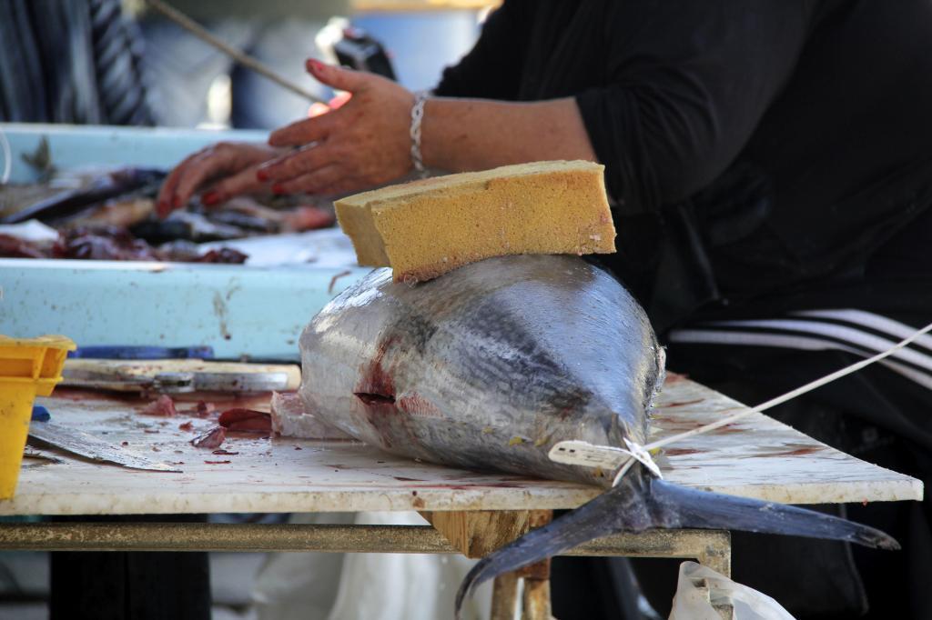 Marseille Fish Market Provence