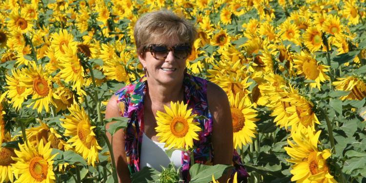 #Provence Patricia Sands Author @patricia_sands #Sunflowers