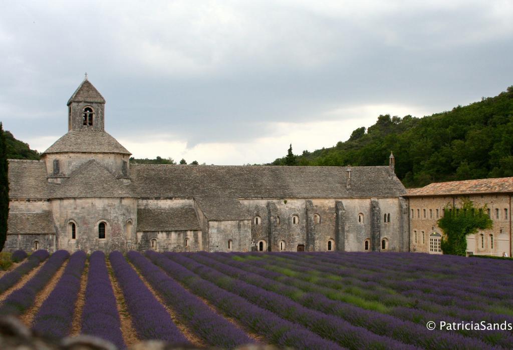 #Provence Patricia Sands Author @patricia_sands #Lavender