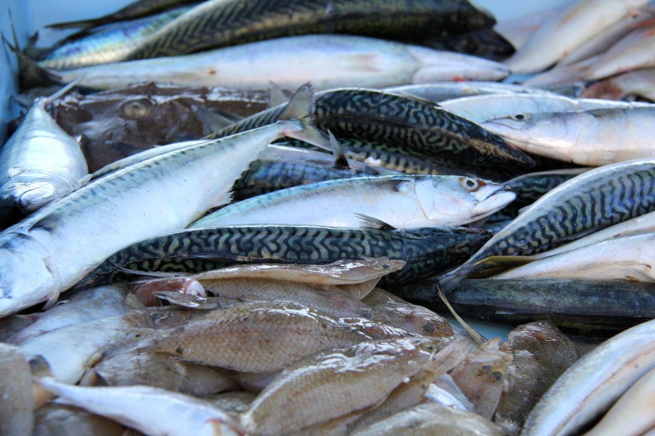 Fish Market #Marseille @PerfProvence