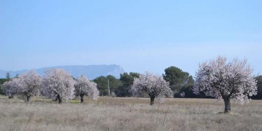 Springtime in Provence Almonds @DreamyProvence