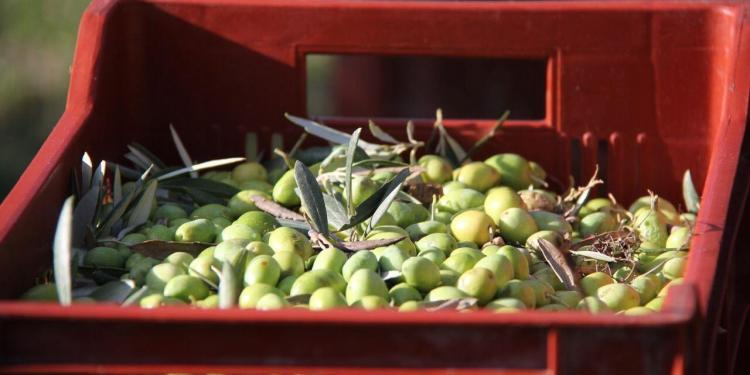 Olives in Provence #Provence #Olives @PerfProvence