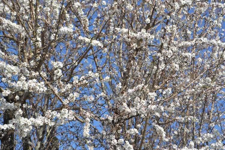 Springtime in provence for Piscine yves blanc aix en provence