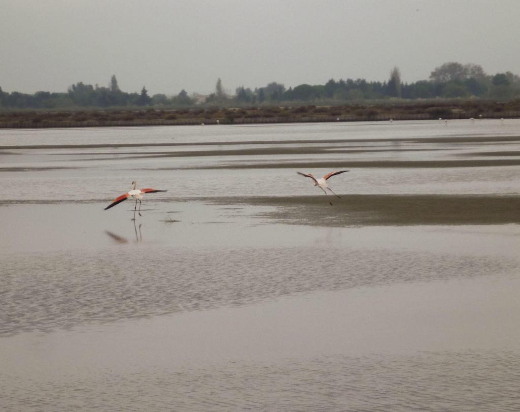 Pink Flamingos Aigues Mortes Salt flats Fleur de Sel Salins @PerfProvence