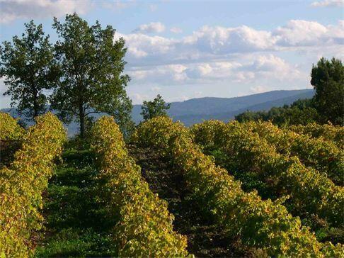 Les Pastras Vines @LesPastras #Provence #Truffles