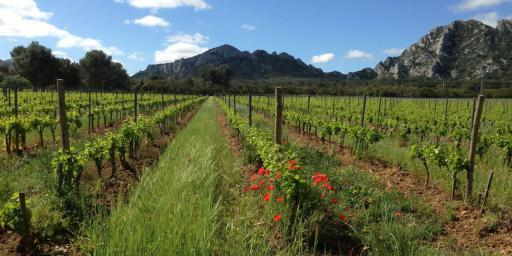 Domaine des Terres Blanches St Remy Provence Wines