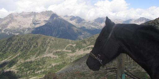 Vermato Horse Mercantour National Park