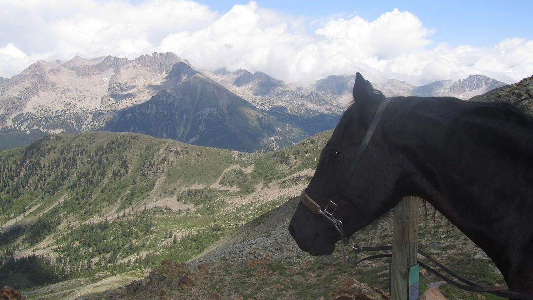 Vermato and Horse Mercantour National Park #Provenc