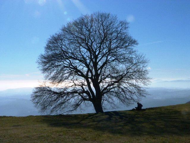 oak tree in winter at Le Caire, Tourettes sur Loup @FibiTee