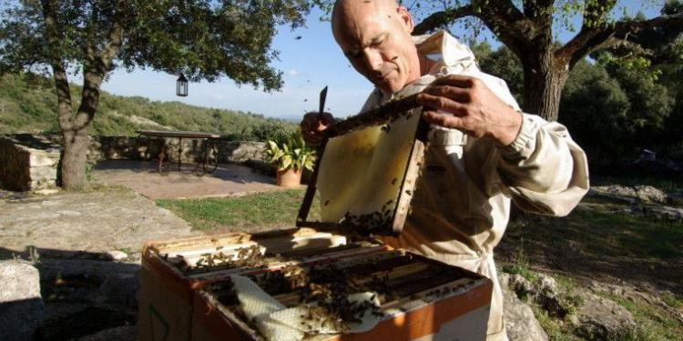 Cotignac beehive-removal @Mirabeauwine #Honey #Provence