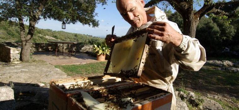 Cotignac beehive-removal @Mirabeauwine #Honey #Provence