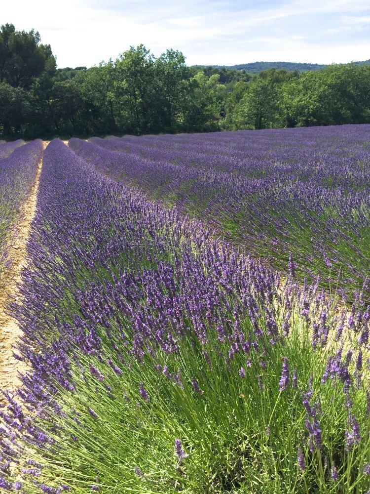 Best Bed And Breakfasts In Provence France