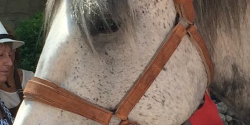 horse in a flat-cap @vauclusedreamer