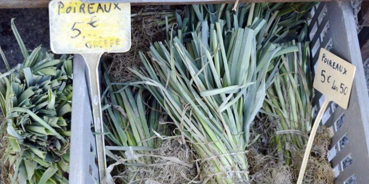 French leeks Poireaux #leeks @CuriousProvence