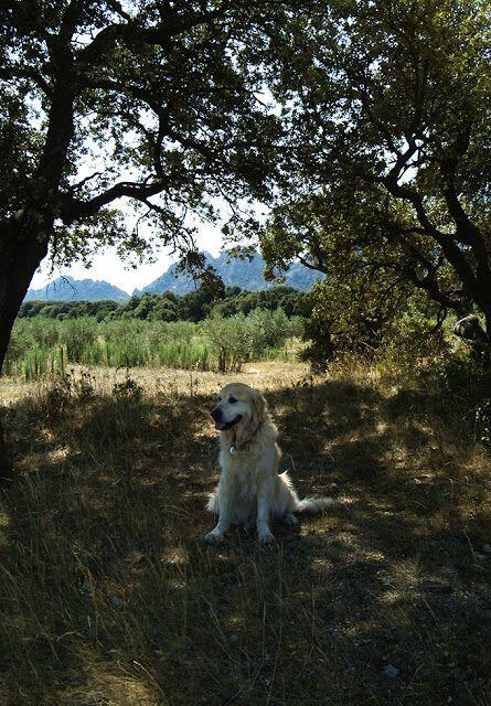 Alpilles #Provence @LostinArles @HeatherRobinson