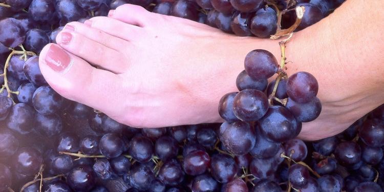 Les Pastras Grape Crush #WinesofProvence @LesPastras