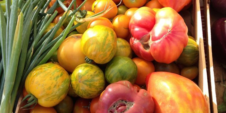 tomato bounty #Provence @ElizabethBard