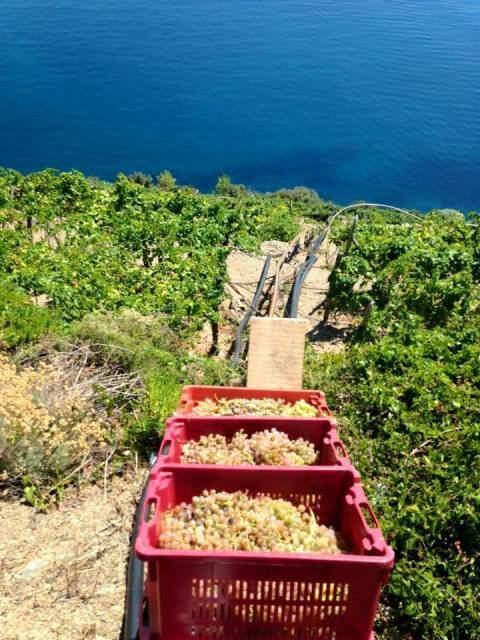 Cantine Litan #Vendage #Wine #Harvest @RivieraGrape