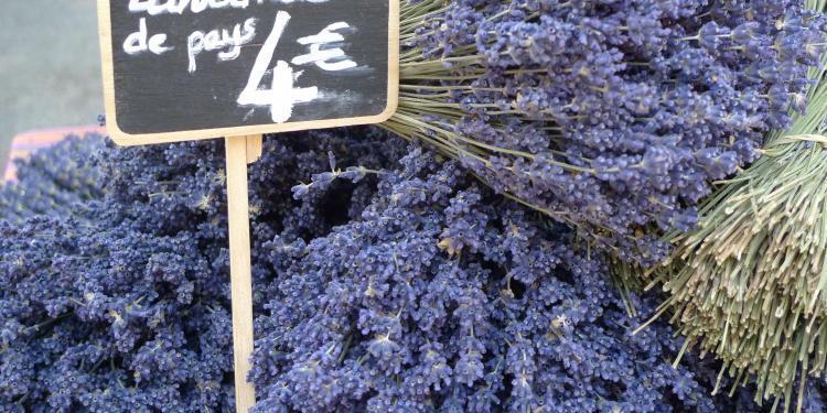 Lavender #Provence
