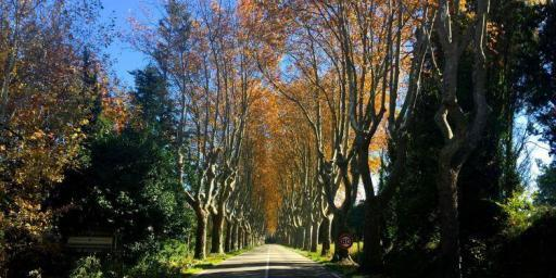 Fall photos of #Provence @BfBlogger2015