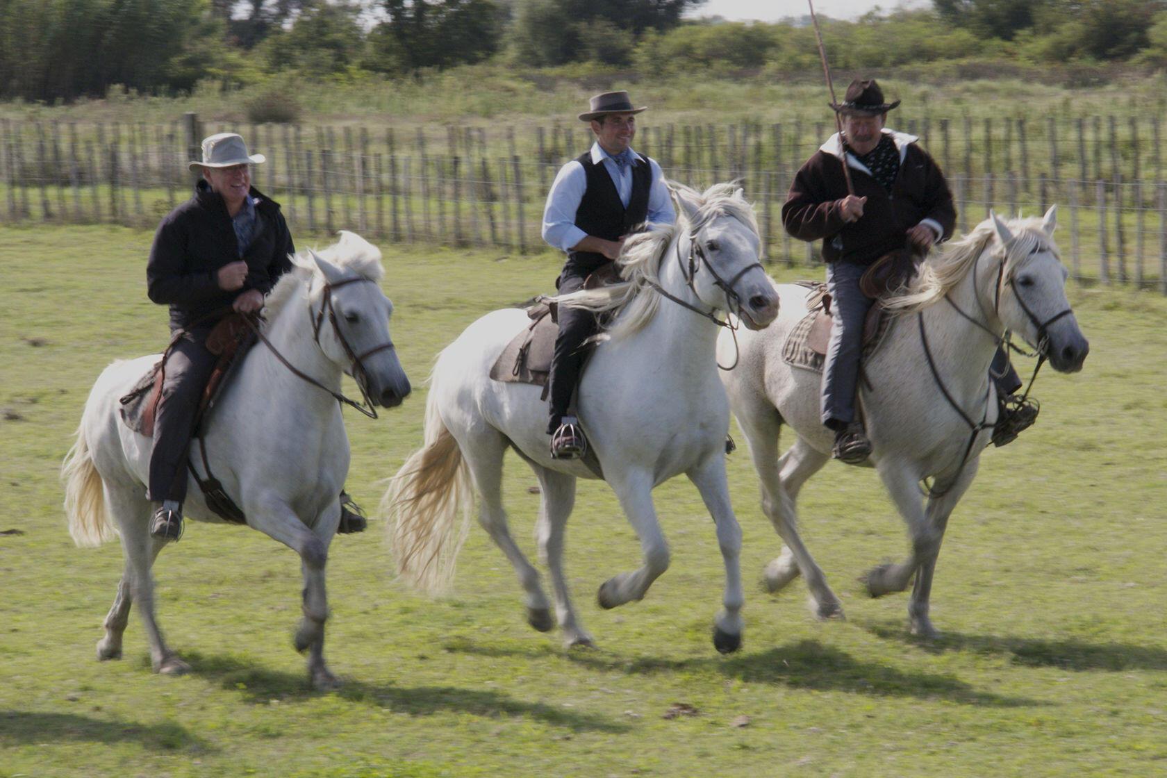 Manade Horses Camargue Provence