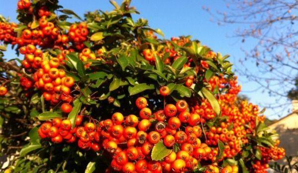Lou Messugo November garden @FibiTee