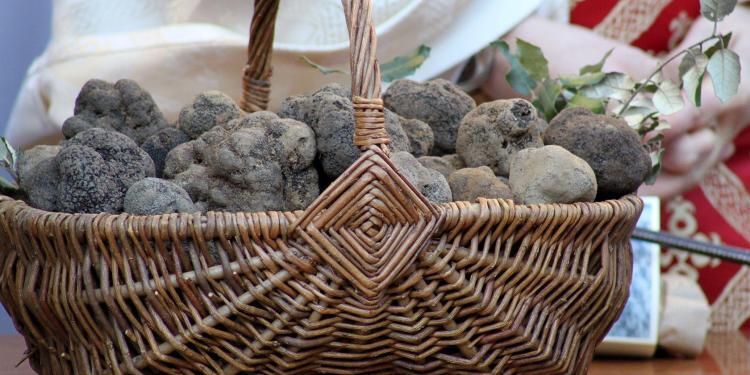 Truffles in Provence #Truffles #MesseDesTruffes @PerfProvence