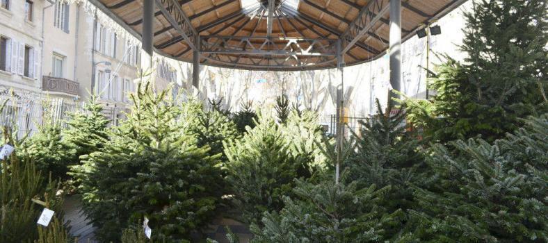 Christmas in #Avignon #Provence @CuriousProvence