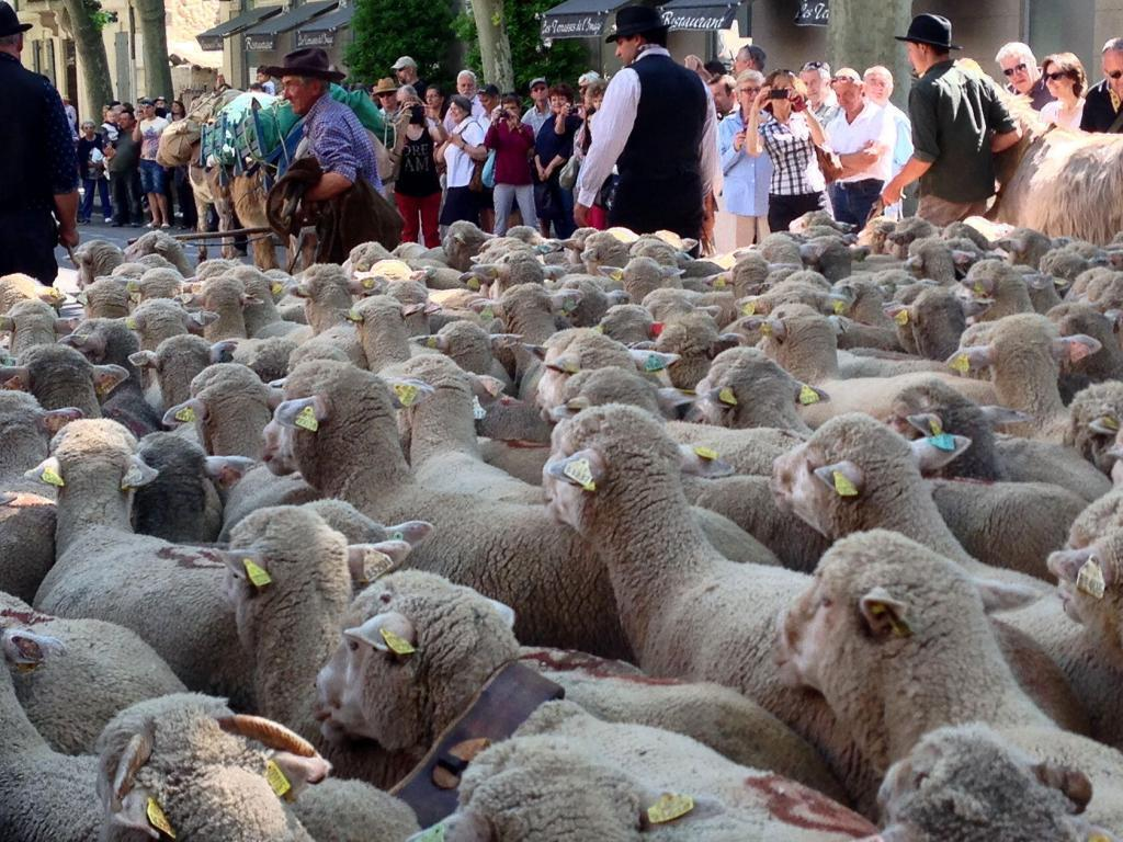 Transhumance #StRemy @PerfProvence