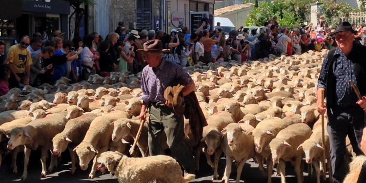Transhumance Provence St Remy @PerfProvence