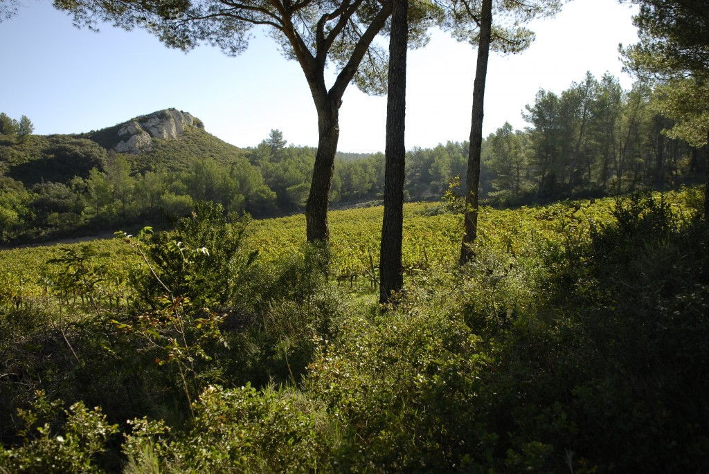 Chateau Dalmeran #WinesofProvence Les Alpilles #AOPLesBauxdeProvence
