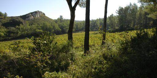 Chateau Dalmeran #WinesofProvence Les Alpilles #AOPLesBauxdeProvence