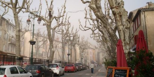 Cotignac Plane Trees @MirabeauWine