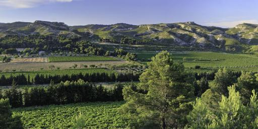 Mas de Gorgonnier Wines of Provence Les Alpilles Les Baux de Provence Photo by Herve FABRE