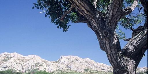Mas de la Dame Wines of Provence Les Alpilles AOP Les Baux de Provence