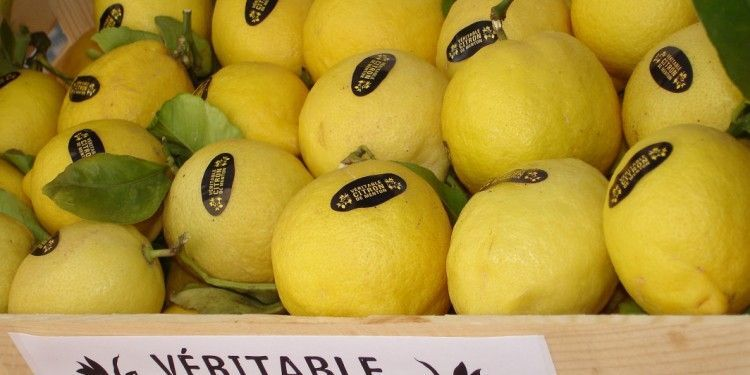 Citrons de Menton Citrus Festival #Menton @AccessRiviera