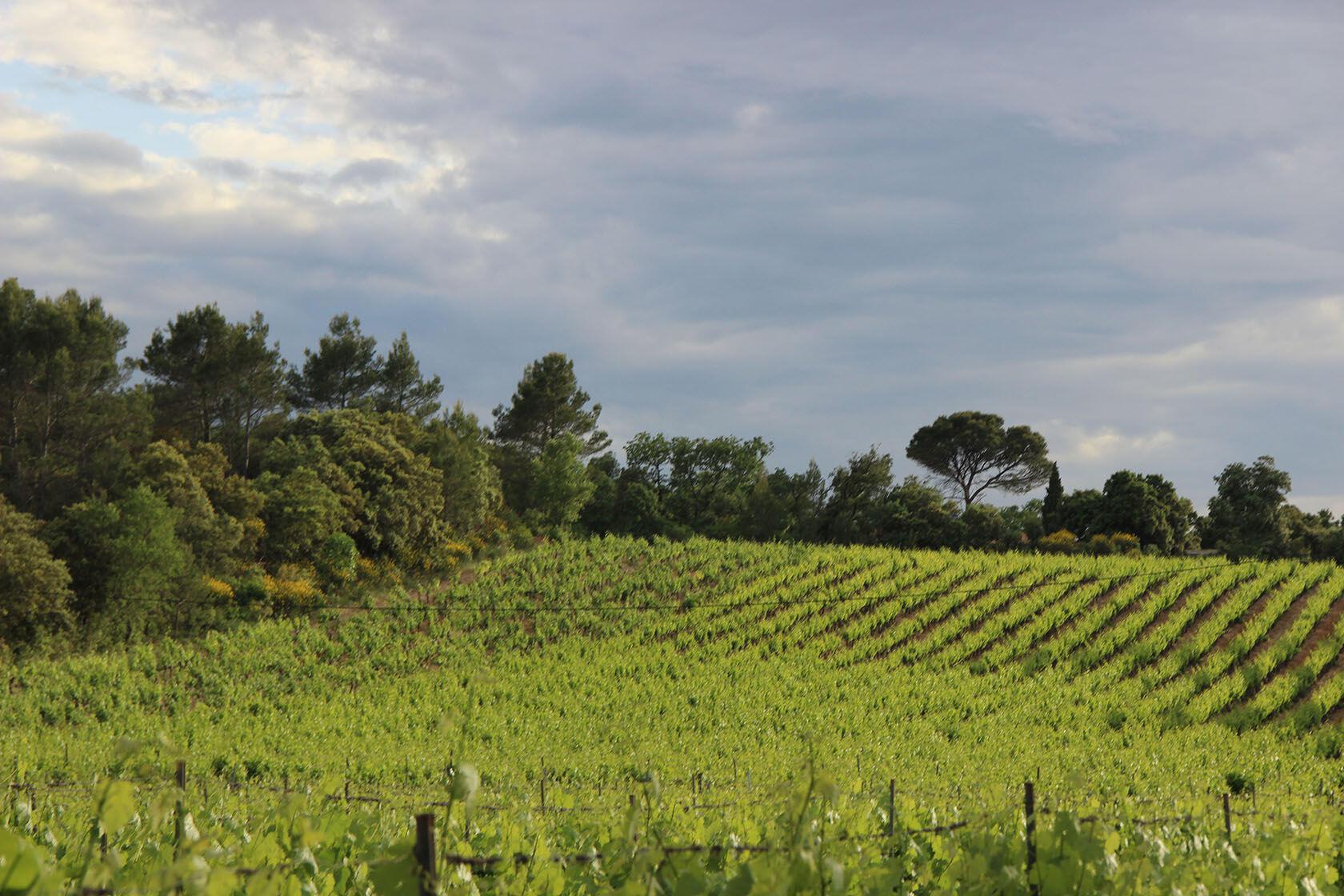 Vineyards beside our house @TessaBaker