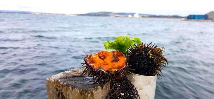 Sea Urchins Facts and How to Eat them @bfblogger2015