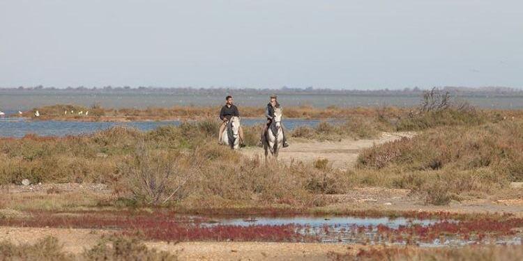 White Horses of Camargue @Bfblogger2015 @alanmcbride