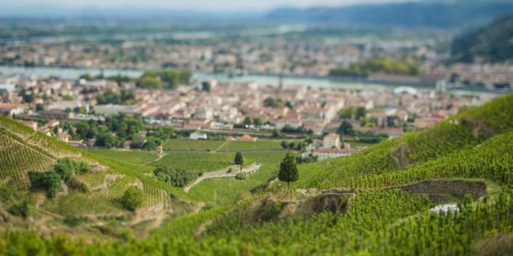 Visit French Wine #WinesofProvence @JillBarth