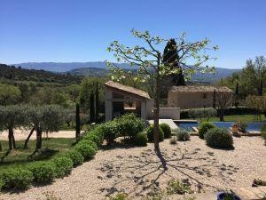 Quince Trees @ProvenceTayls