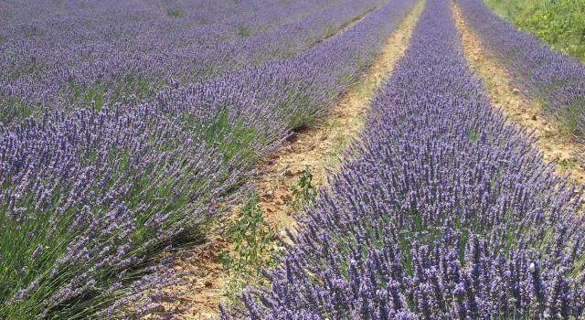 Lavender fields #Provence #VaucluseDreamer