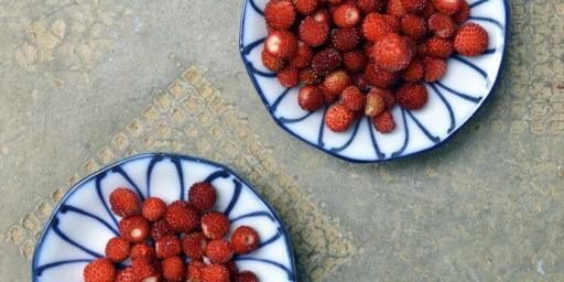 Fraises des Bois Foraging for Strawberries @CuriousProvence
