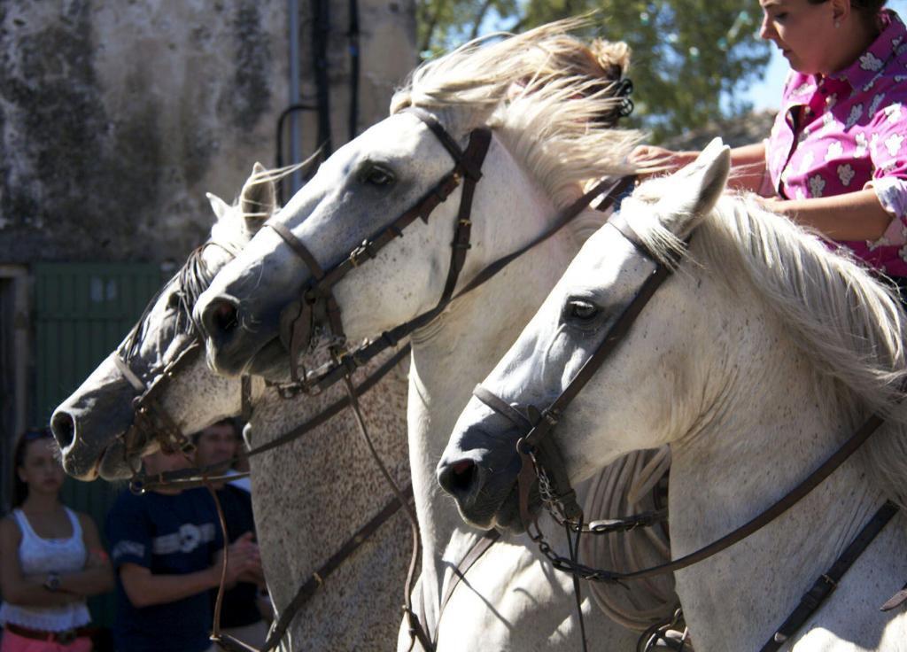 Fete du village Horses #Provence #ExploreProvence @PerfProvence