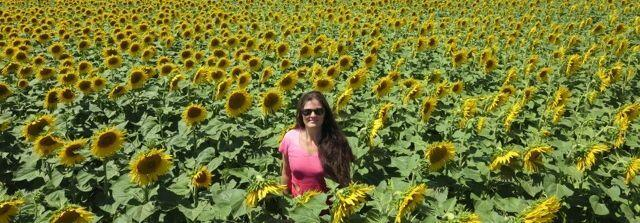 sunflowers Travel with @GirlGoneGallic