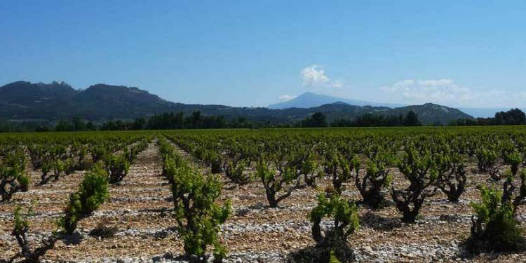Mont Ventoux and Les Dentelles de-Montmirail. Photo Credit: Rhône Wines