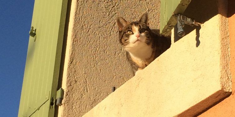 Cat in Provence @VaucluseDreamer