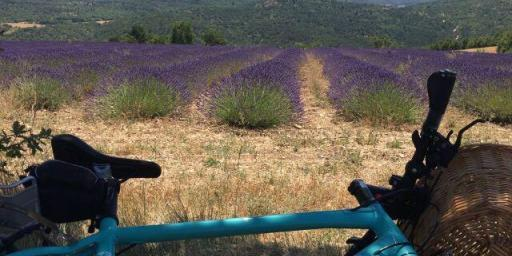 Cycling in Provence @VaucluseDreamer